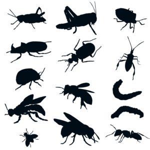 insect scivisto